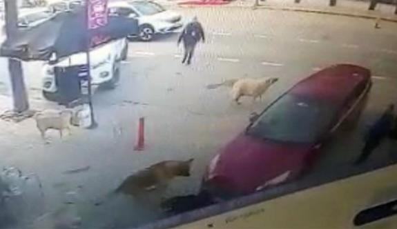 Bu defa ''insanlık'' dersini sokak köpekleri verdi